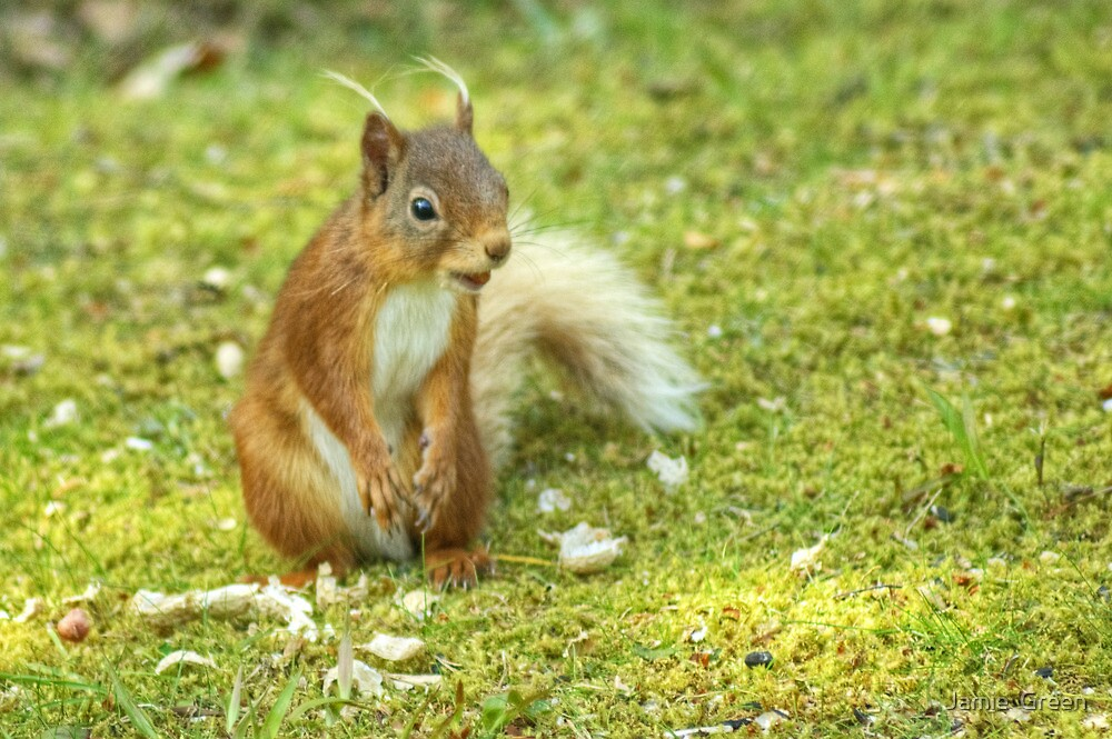 Little Willie Hides His Nuts by Jamie  Green