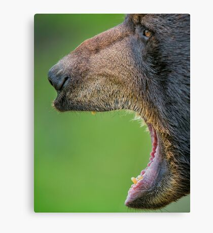Business side of bear Canvas Print