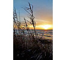 Spring breeze through the reeds Photographic Print