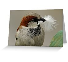 Sparrow feathering the nest ! Greeting Card