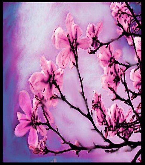 Pretty Pink Flowers by iggys
