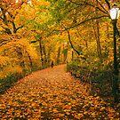 Autumn Path - New York City by Vivienne Gucwa