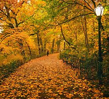 Autumn Path - New York City by Vivienne Gucwa