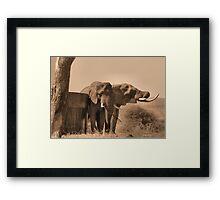 IN SEPIA- SENIOR COMPANY - THE AFRICAN ELEPHANT -Loxodonta africana Framed Print