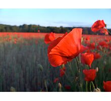 Poppy among Poppies Photographic Print