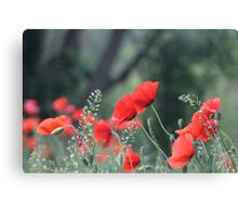 Poppies in Provence Canvas Print