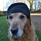 It's so cold in England, even the dogs wear wooly hats by Paul Hickson