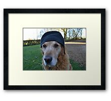 It's so cold in England, even the dogs wear wooly hats Framed Print