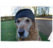 It's so cold in England, even the dogs wear wooly hats Poster
