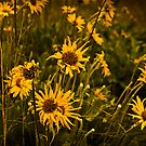 yellow flowers by sbc7