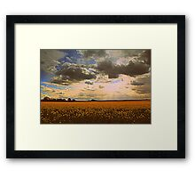 Oilseed Rape Fields, along the Teesdale Way Trail. North England Framed Print