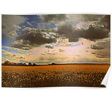 Oilseed Rape Fields, along the Teesdale Way Trail. North England Poster
