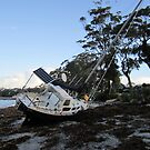 High & not so dry! (Callala Bay, NSW) by Lunaria