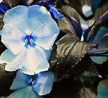 Blue Velvet by Scott Mitchell