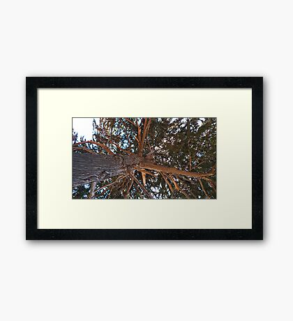 Mighty Cypress Framed Print