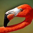 A Flamingo by Eileen Brymer