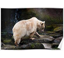 The cute bear Poster