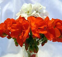 Red and White geraniums by Jim Sauchyn