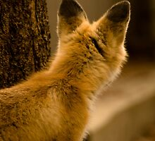 Red Fox Pup - Breckenridge, Colorado by Jason Heritage