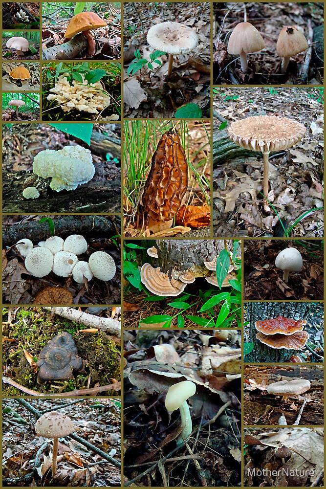 Pennsylvania Mushrooms Collage #3 by MotherNature