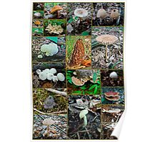 Pennsylvania Mushrooms Collage #3 Poster