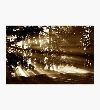 Bursting Photographic Print