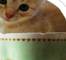 Creamy Coffee - kitten clothes & stickers Sticker