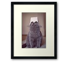fig 1.4 - Cat with Chinese takeaway box on head Framed Print