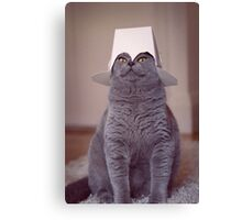 fig 1.4 - Cat with Chinese takeaway box on head Canvas Print
