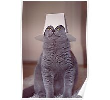 fig 1.4 - Cat with Chinese takeaway box on head Poster