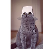 fig 1.4 - Cat with Chinese takeaway box on head Photographic Print