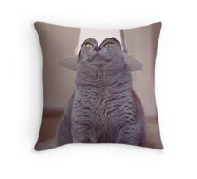 fig 1.4 - Cat with Chinese takeaway box on head Throw Pillow
