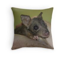Baby brush tailed bettong aka Woylie in WA Captive Throw Pillow