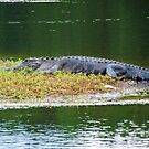 Lazy Gator by Cynthia48