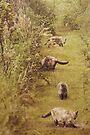 Garden Cat Stroll by KBritt