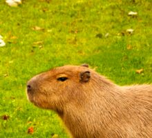 I love capybaras! Sticker