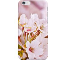 Japanese Cherry Blossoms iPhone Case/Skin