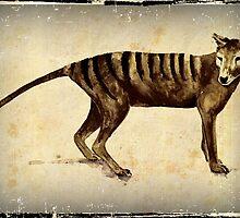 Tasmanian Tiger (thylacine)  by Cindy Watkins