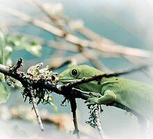 Northern Green Gecko by Deborah Clearwater