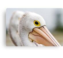 A Pelicans' Gaze Canvas Print