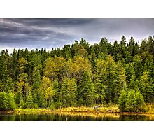 Forest Life Photographic Print