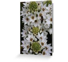 Flores e abelha Greeting Card