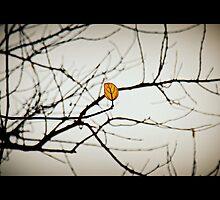 Solitude by srmandalia