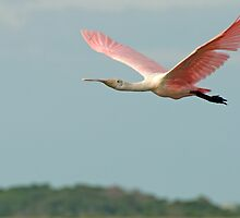 Spoonbill flys off into the sunset by TJ Baccari Photography