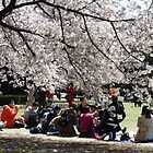 Under the Cherry Blossom in Spring by junkgirl