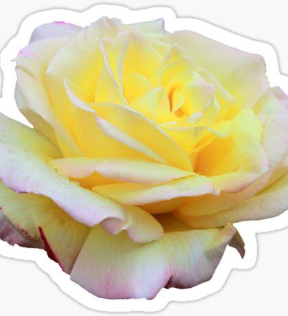 Tea Rose Sticker Sticker