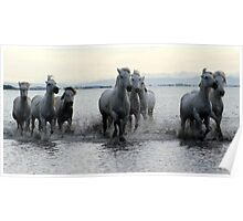 The White Horses of Camargue Poster