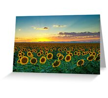 Sunflower Sea Greeting Card