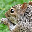 Through A Squirrrel's Eye by Ron Russell