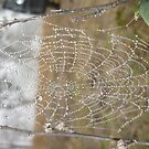 dew on the web by ToniBlake